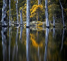 Reflected by Jill Fisher