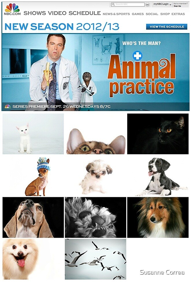 Animal Practice by Susanne Correa