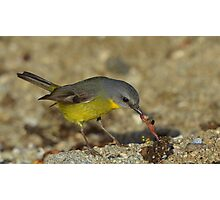 """The early Bird catches the Worm"""" MARLO.VIC. Photographic Print"""