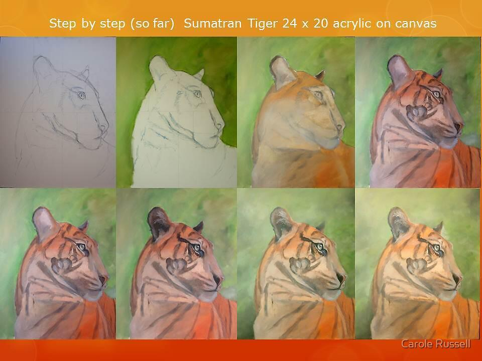 Stages 1-8 Sumatran tiger by Carole Russell