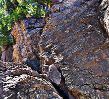 Climbing Rocks And Trees by perkinsdesigns