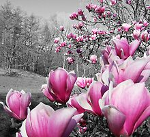 Spring Blossoms by perkinsdesigns