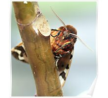 Garden tiger moth Poster