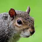 Squirrel 056 by Magic-Moments