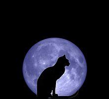 Black Cat Blue moon by Vicki Field