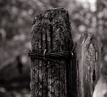 Rust, Moss and Wood by Simon R. Court