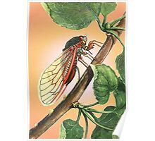 Vector Image of A 17 Year Cicada Poster