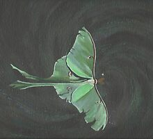 Actis luna - Luna Moth by Edmund J. Gray