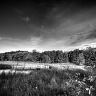 Wetlands by Nate Welk