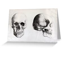 Human Skull - Frontal & Profile Greeting Card