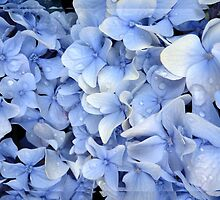 Shades of Blue... by LindaR