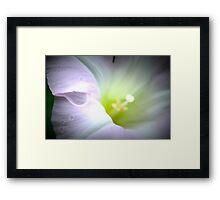 Wild Morning Glory Framed Print
