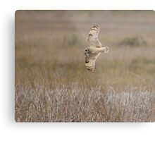 Bringing Home the Rodent Metal Print