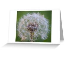 Light as a feather Greeting Card