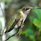 Sweet Little Hummingbird by Kathy Baccari