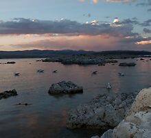 Mono Lake Flocking at Sunset by Dale Lockwood
