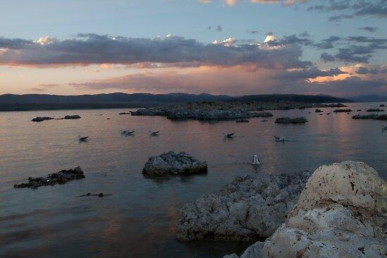 Mono Lake Flocking at Sunset by Dale Lockwood