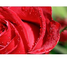 Red Rose after the Rain Photographic Print