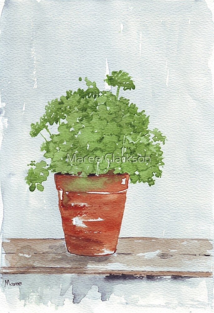 Parsley in a Pot - Botanical by Maree Clarkson