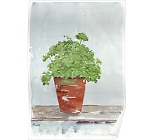 Parsley in a Pot - Botanical Poster