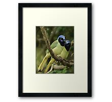 Just a Pair of Green Jays Framed Print