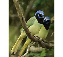 Just a Pair of Green Jays Photographic Print
