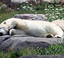 Chillin' Polar Bear by Brandy Bentz-Jackson