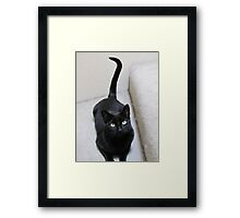 Gracie seems to have a ?. Framed Print