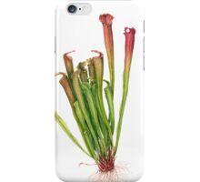 Pitcher Plant - Sarracenia sp. iPhone Case/Skin