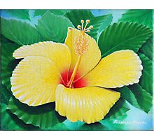 The Sunshine flower Photographic Print