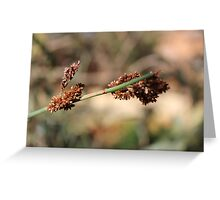 Cape Reed Grass Greeting Card