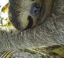 Sloth Greeting Card & Coffee Mug Sticker