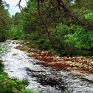 A lovely little rocky stream by jchanders