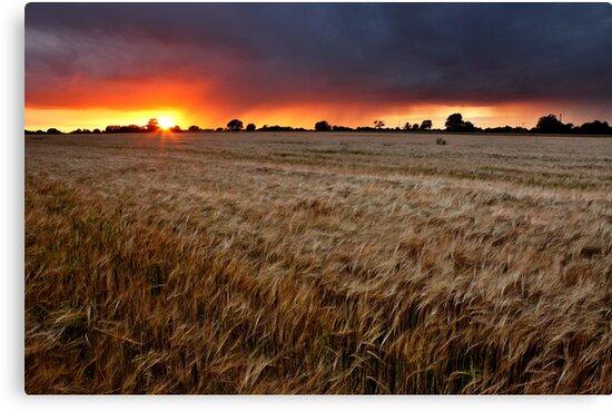 Sunset Through The Rain, Essex (2) by Mat Robinson