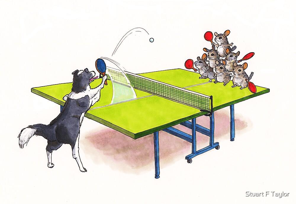 Chinchilla Ping Pong by Stuart F Taylor