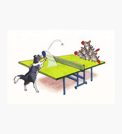 Chinchilla Ping Pong Photographic Print