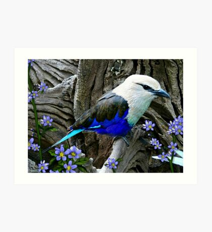 Blue Breasted Roller Art Print