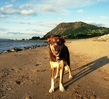 Cody at the beach. by Michael Haslam