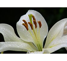 White lily with RainDrops Photographic Print