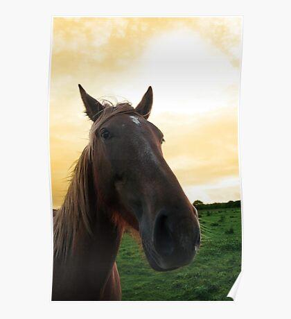 horse head portrait Poster