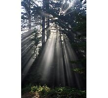 Sun Rays Crossing a Misty Coastal Forest Photographic Print