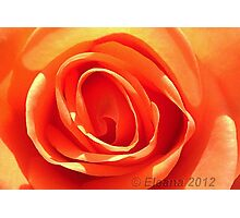 Rose on Fire Photographic Print