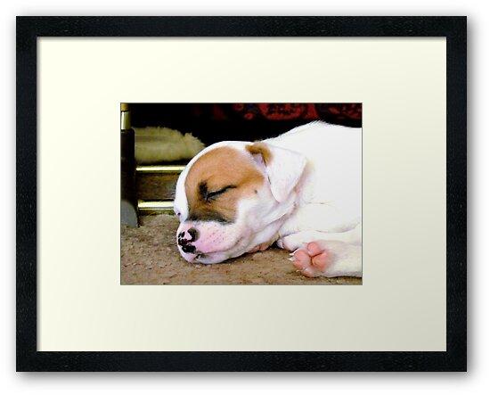 Marlie sleeping by Brenda Dahl
