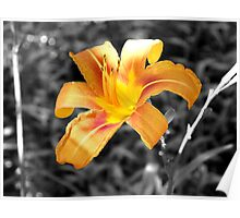 Beautiful B & W Colored Flower Poster