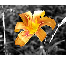 Beautiful B & W Colored Flower Photographic Print