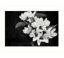 Blossom - Black and White Art Print