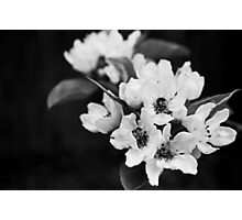 Blossom - Black and White Photographic Print