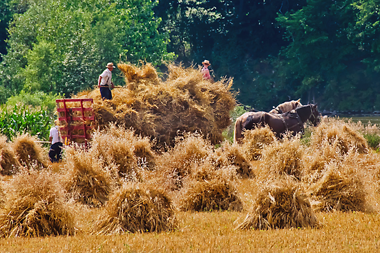 Bringing In The Sheaves by jules572