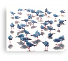 Blue bird V Canvas Print