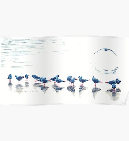Blue birds VII Poster